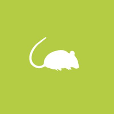 fumigacion de ratas y ratones precios