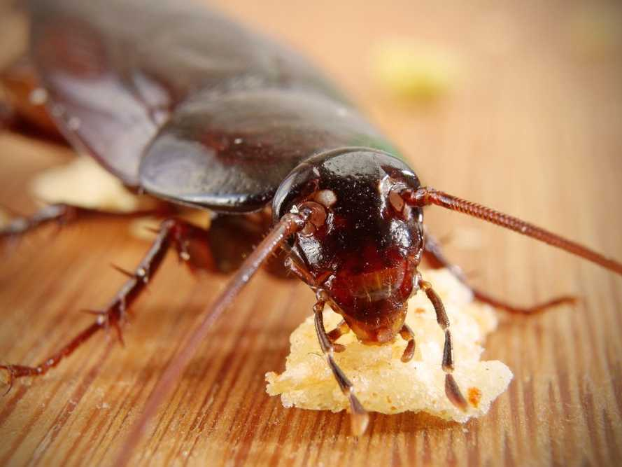 Cucarachas eliminar